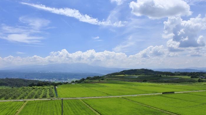 いちだんと緑映える田圃に、風が吹きわたる、今ならではの涼しげな風景。